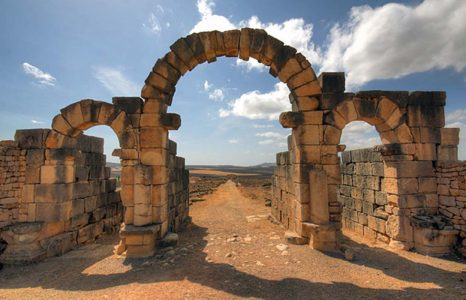 Valuable-Volubilis